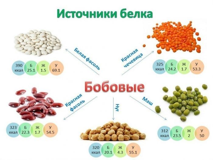 Какие продукты являются белковыми
