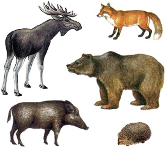 Красная книга России Животные  Список млекопитающих занесённых в Красную книгу России