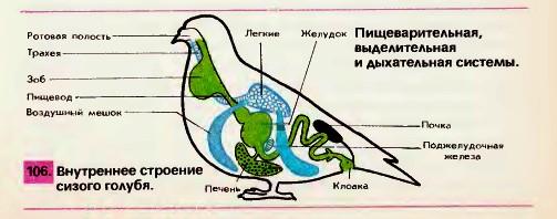птицы строение картинки
