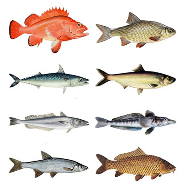 Какую нежирную рыбу можно есть при диете