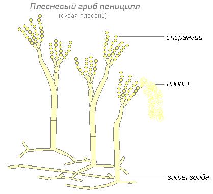 В каких органах у человека есть глисты