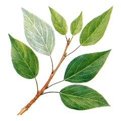 Сбогатею листок зеленый для меня возьми у тополя всего